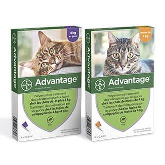 Advantage Pipettes antiparasaitaires pour chat