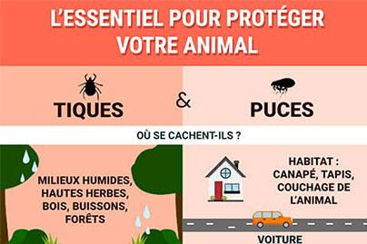 Infographie : L'essentiel pour protéger votre animal contre les puces et les tiques