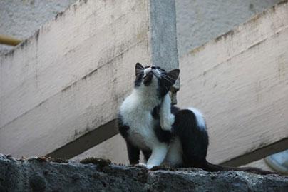 Le blog : Que faire contre les puces de mon chat ?