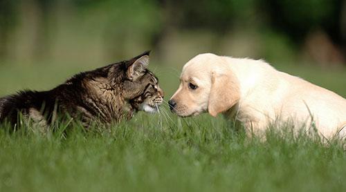 Chien et chat dans la nature