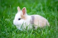 Lapin blanc et beige dans l'herbe