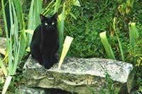 Chat assis sur une pierre entouré par la nature.