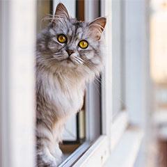 Chat et balcon ou fenêtre : prévenir les risques