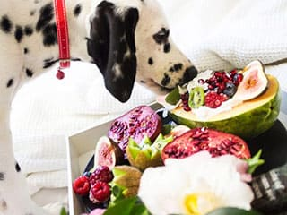 Quels fruits et légumes donner à mon chien ?