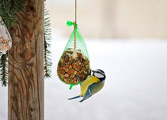 Comment nourrir son oiseau