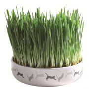 Gamelle Céramique avec herbe à chat