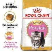 Royal Canin Race Persian Kitten