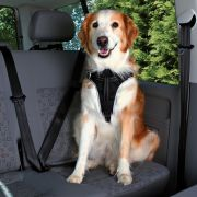 Trixie Harnais Voiture Dog Protect