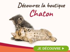La boutique Chaton