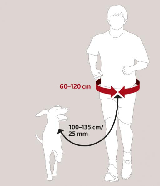 Comment mettre une ceinture et un harnais canicross